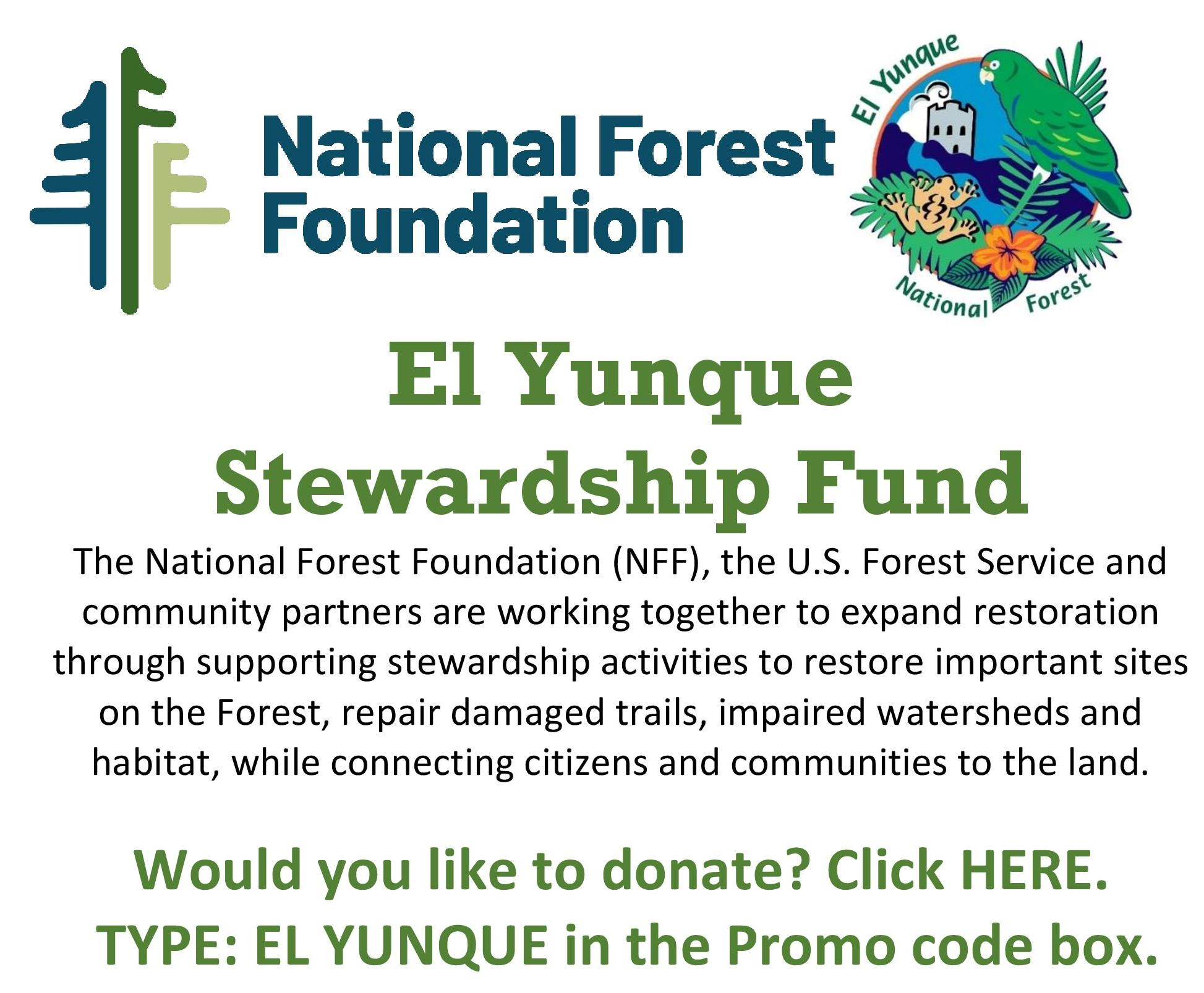 El Yunque Stewardship Fund