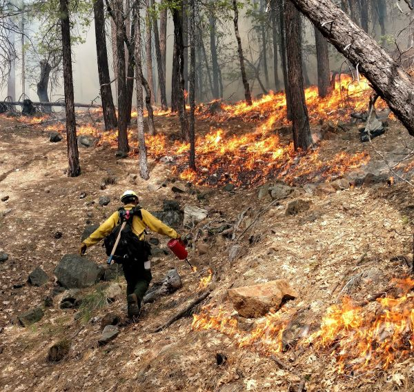 Image of a firefighter on a prescribed burn