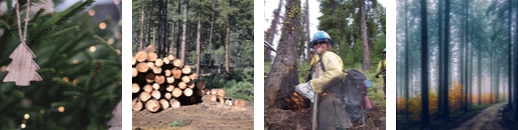 Several aspects of Timber Management
