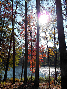 Sunshine and autumn leaves on Ratcliff Lake in the Davy Crockett National Forest.