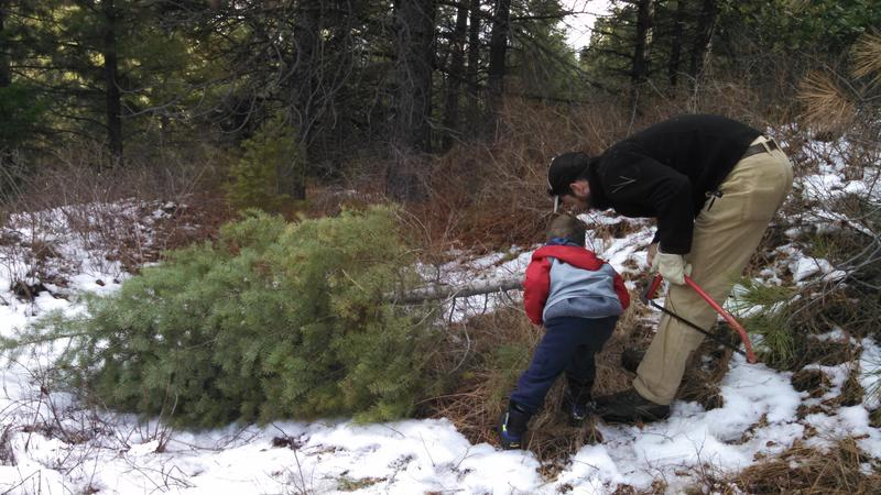 Photo of getting a Christmas Tree - Payette