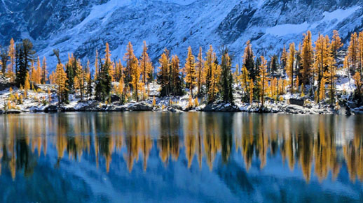 Larches reflected in Alpine Lakes Wilderness