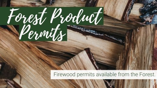 Explore the forest products permits available.
