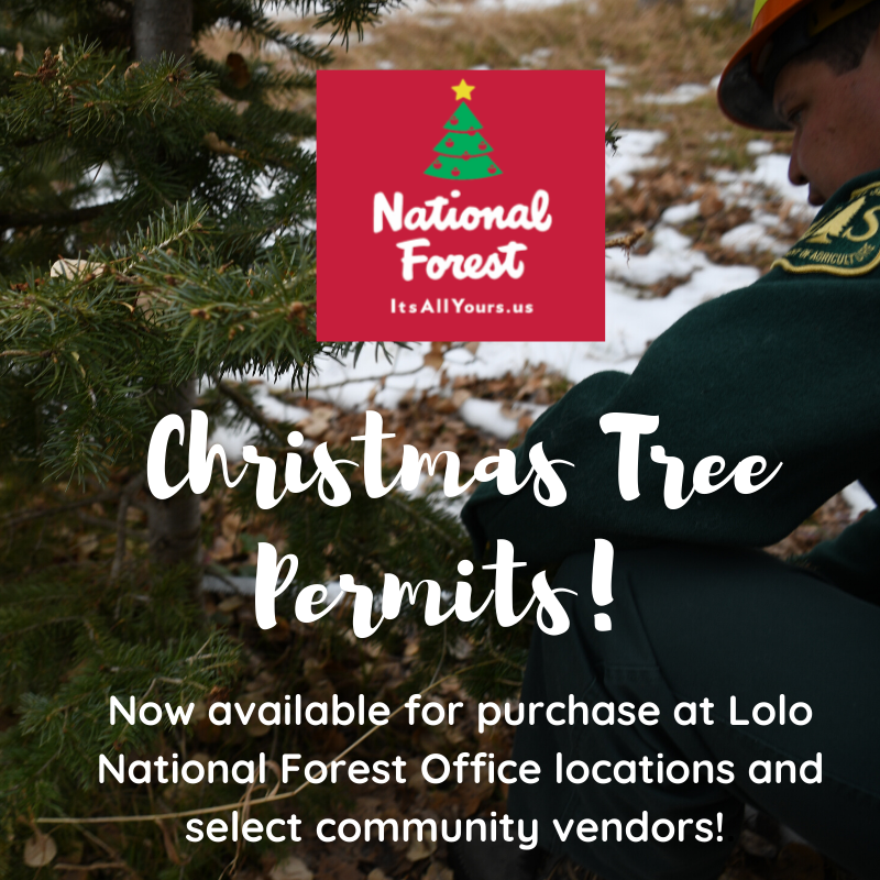 Christmas Tree Permits are Available Now at Lolo National Forest Offices