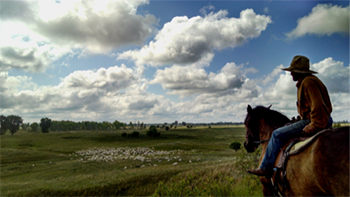 Man on a horse in field