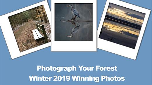 Photos of an owl, brown leaves, and a hiker's boots say Capture the Forest winner.