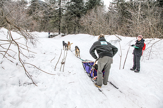 A musher and dogsled.
