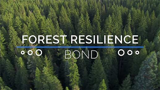 Forest Resilience Bond.