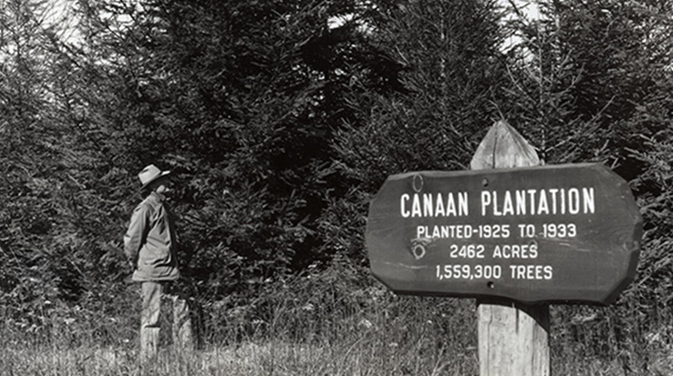 Cheat District Ranger Ralph L. Rowland inspecting tree growth at Canaan Mountain Plantation