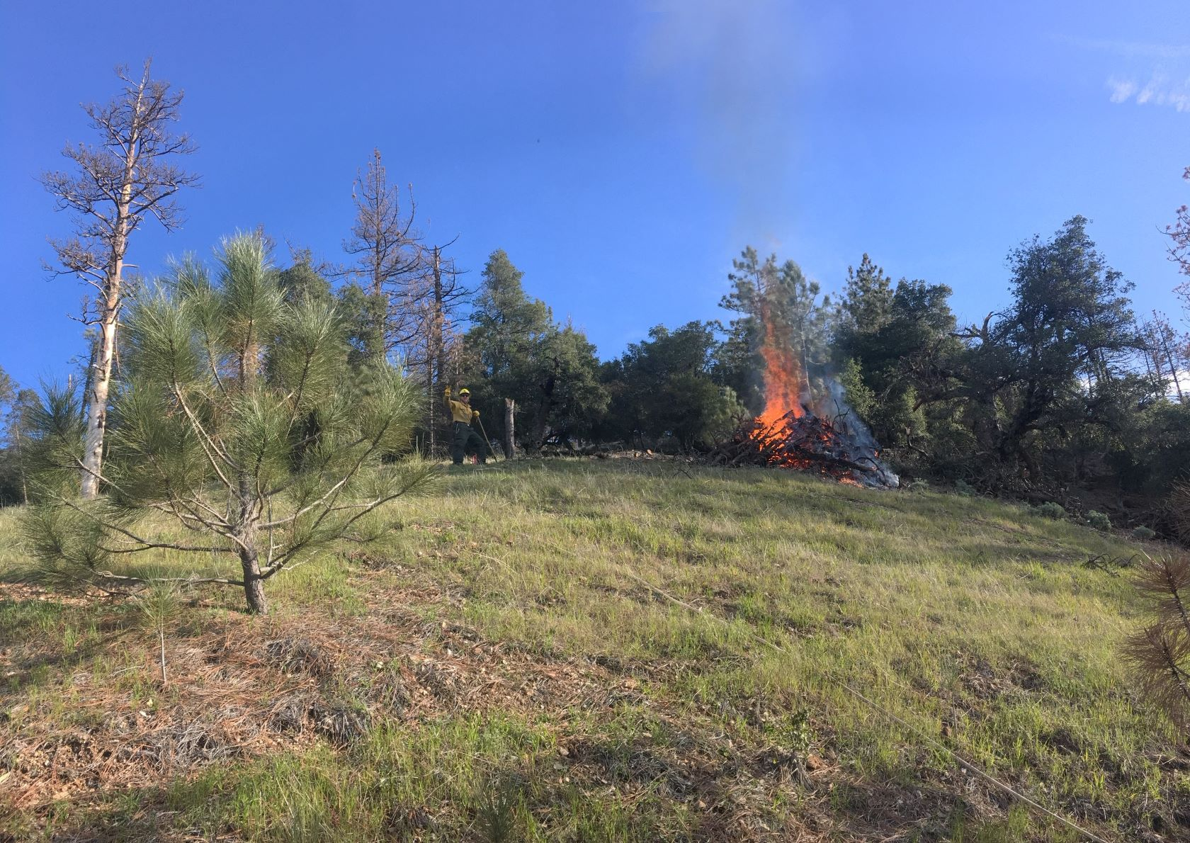 Pile Burning Santa Lucia Ranger District