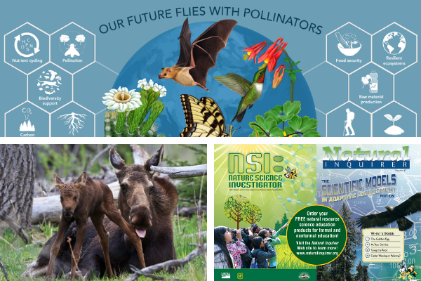 3 photos pollinators, moose with young & natural inquirer