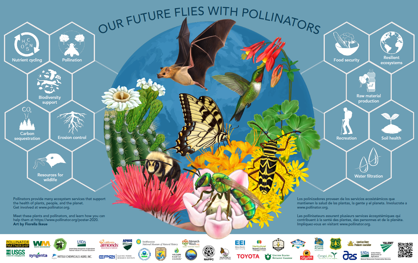 poster with different pollinators-bees, bats, etc