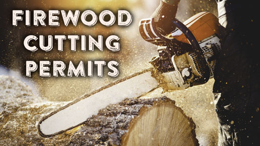 Firewood cutting permits available