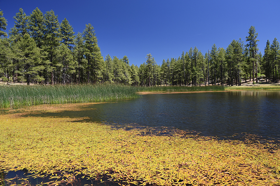 kaibab national forest jd dam https www fs usda gov recarea kaibab recarea recid 11663