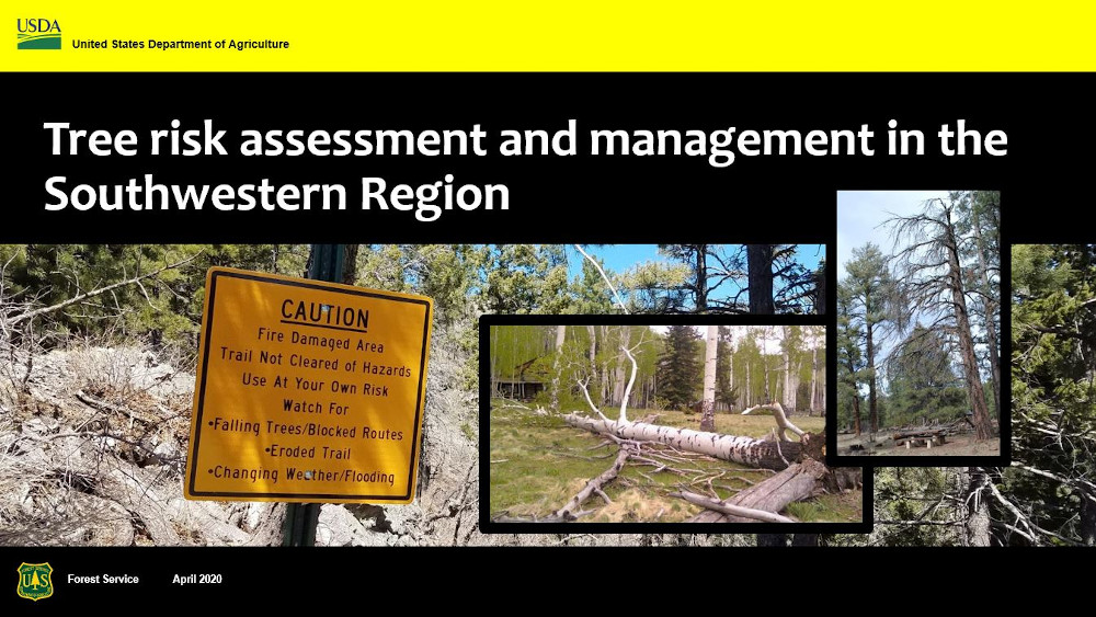 Cover of tree risk management presentation