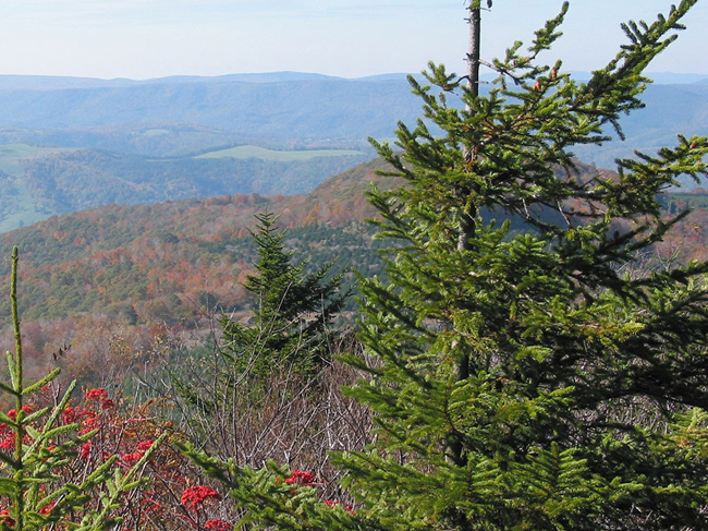 An eastern red hemlock hangs in front of a vista of the rolling hills of West Virginia.