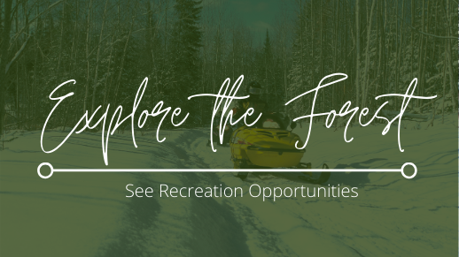 Explore the ways you can explore the Forest.