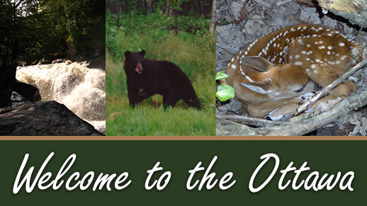 Welcome to the Ottawa National Forest website.