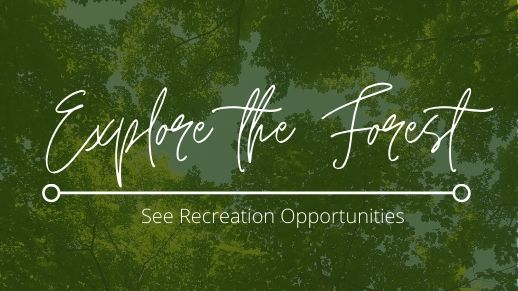 Explore recreation opportunities on the forest!