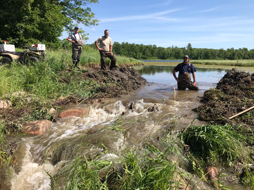 Three Forest Service employees remove a beaver dam.
