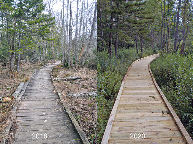Before and after pic of a rpaired boardwalk shows signifcant progress in flatness and durability.