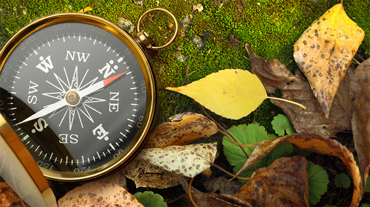 Compass on a bed of moss with yellow fall leaves laying nearby.