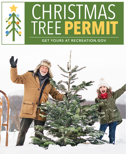 Christmas Tree Permits Arizona 2020 Coconino National Forest   Forest Products Permits