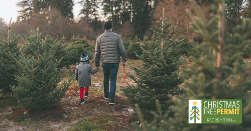 A child and man walking through field of Christmas trees