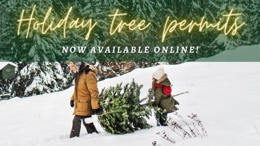 Holiday tree permits are available online!