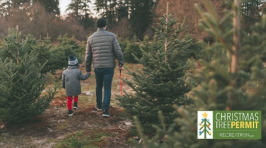 Adult and child walk together towards small fir trees.