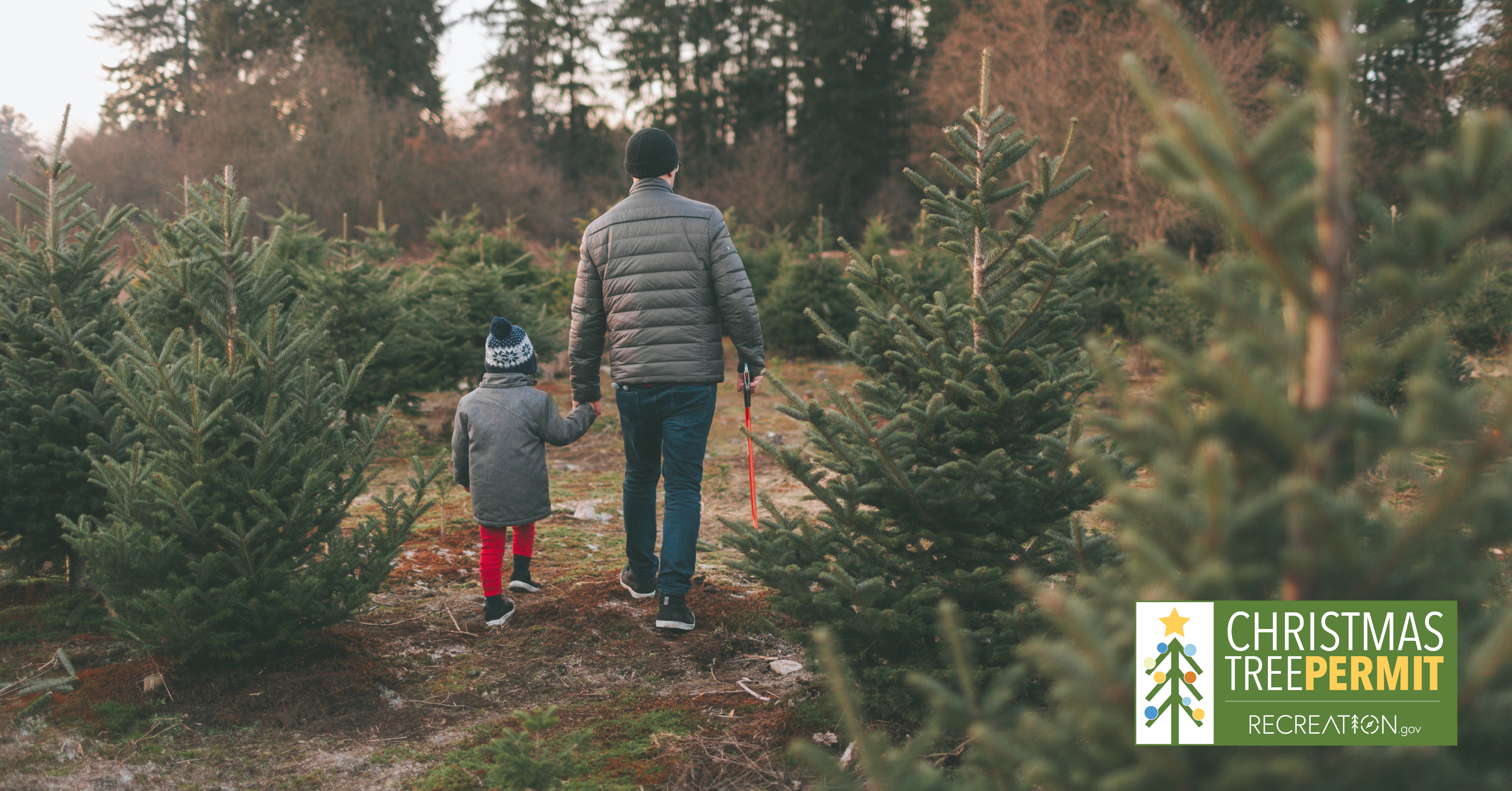 Christmas Tree permits are now available for purchase on Recreation.gov