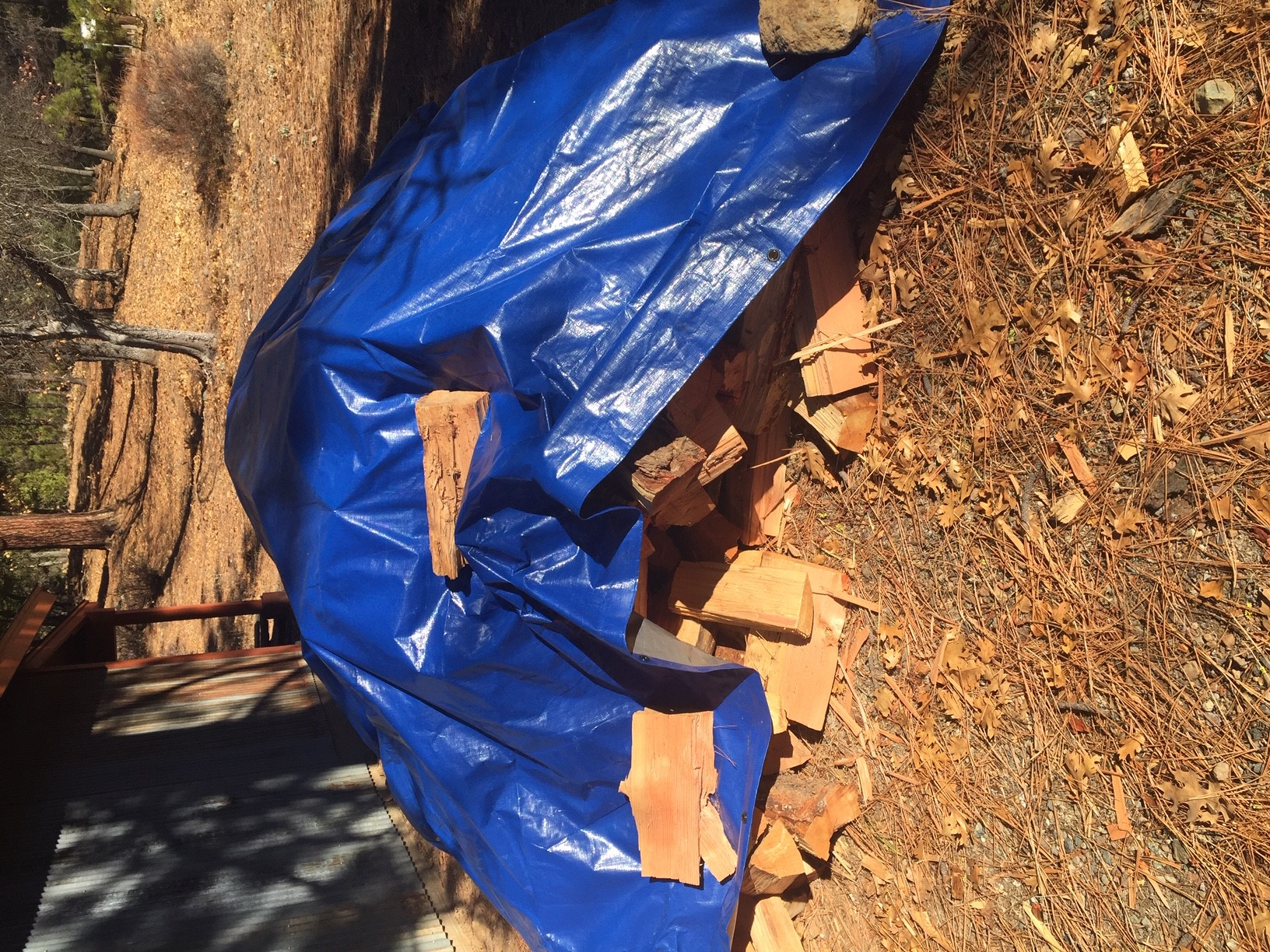 Photo of a wood pile covered with a blue tarp