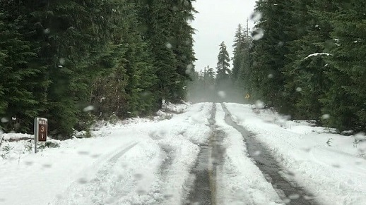 Image of snow and slush covered road in the forest.