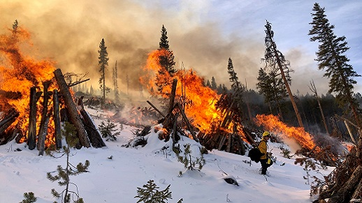A pile of woody debris on fire in the snow.