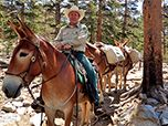 Pack Stock Center of Excellence packers lead horses and mules through wildernesses and mountains.