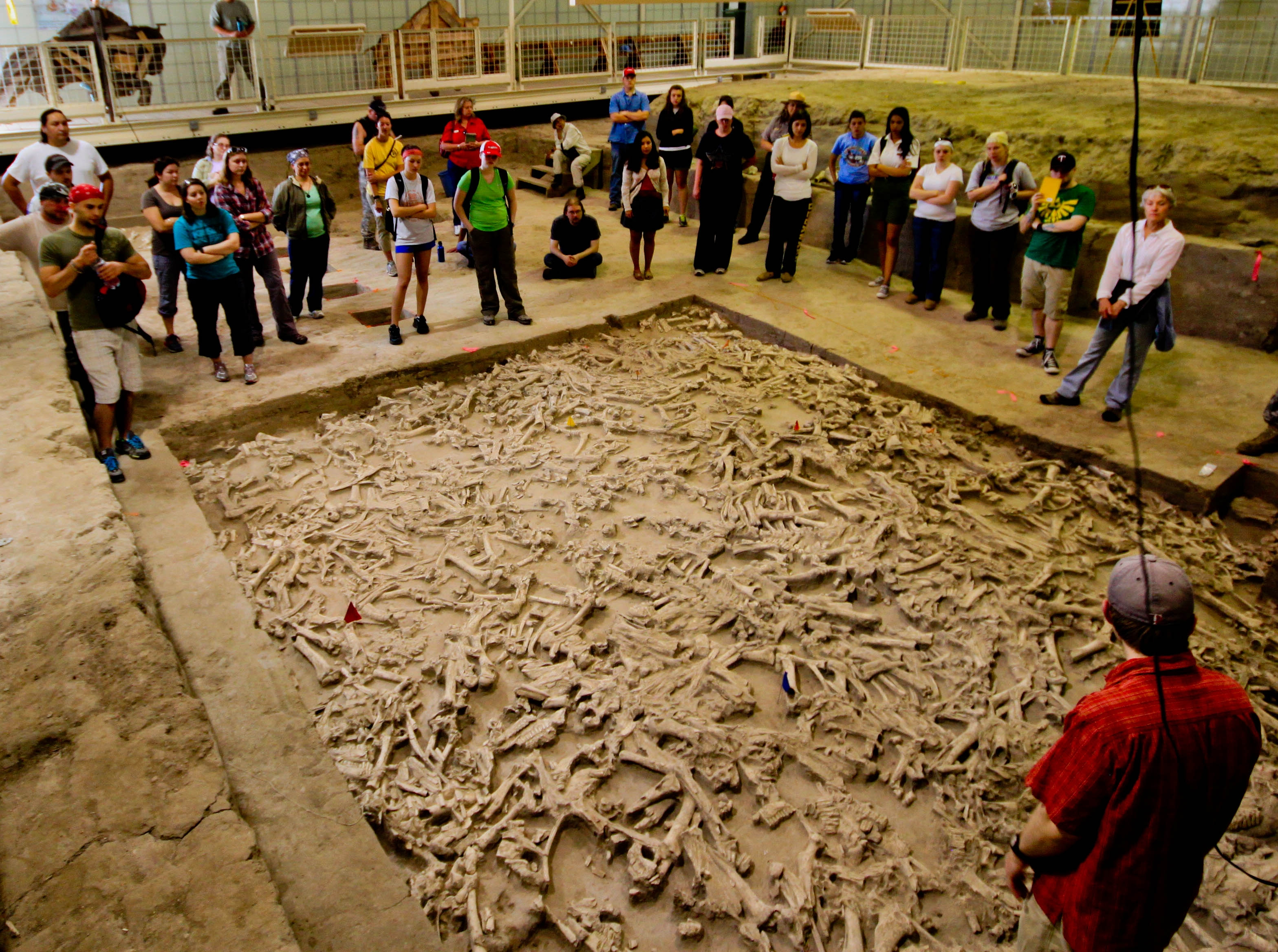 people standing around an archaeological dig of bison bones