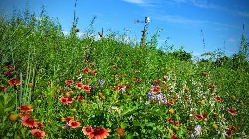 Black Kettle National Grasslands, pollinator garden