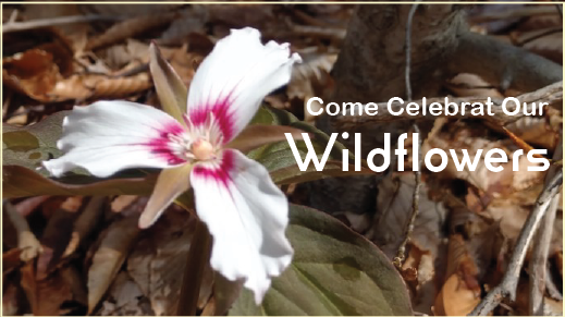 Celebrate Our Wildflowers