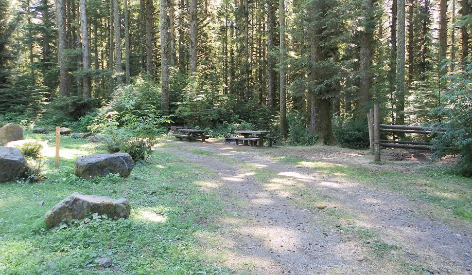 Two picnic tables on grass, surrounded by tall pine trees