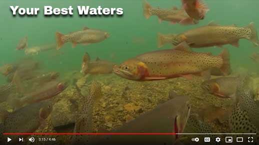 Fish swimming in Your Best Waters video. Click to watch.