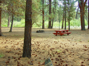Picnic table and fireplace for camping under the pines at Shafter Campground