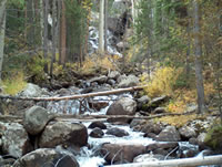 photo forest stream Canyon Lakes Ranger District