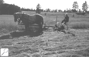 Mowing using horse-power in 1965.