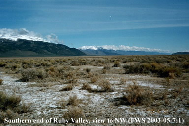 Photopgraph of Fort Ruby site on the Southern end of Ruby Valley looking to the Northwest