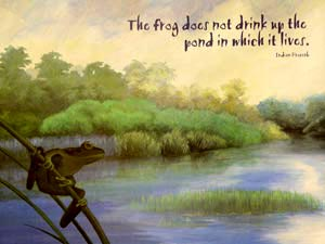 "[Image] A frog looks across a pond. ""The frog does not drink up the pond in which it lives."" Indian proverb"