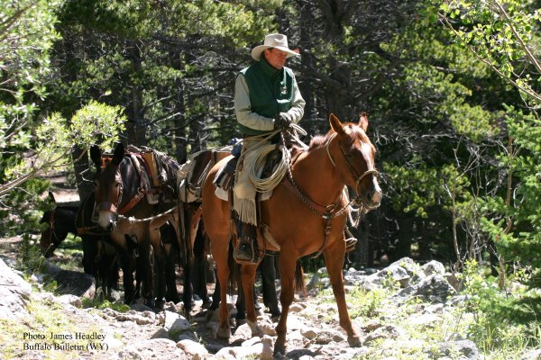 photo-packer on lead horse