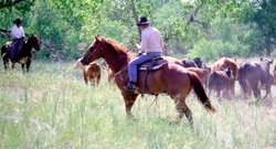 Photo of annual roundup by Morton Grazing Association