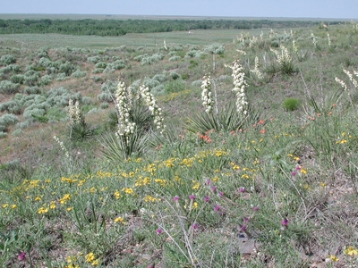 Photo of Cimarron National Grassland.  Photo taken from side of hill looking south to the Cimarron River Corridor.