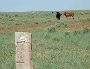 Photo of cows and blanket flower in background with Santa Fe Trail marker in foreground