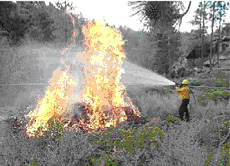 Forest Service employee uses a fire hose to spray water on a prescibed fire. Photo Credit: Rex Norman, Unitd States Forest Service.